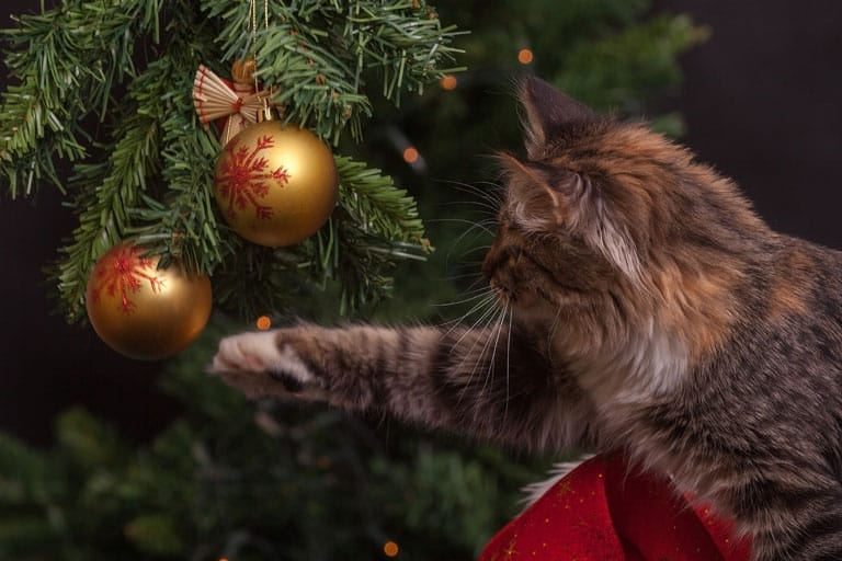 Keep your holiday season cat-friendly